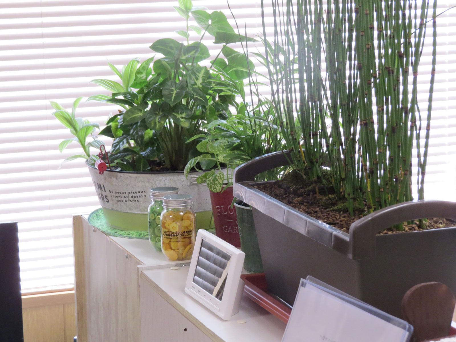 棚の上の植物
